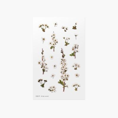 Appree Sticky Pressed Flower Sticker - Bridal wreath