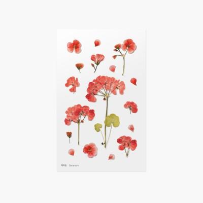 Appree Sticky Pressed Flower Sticker - Geranium