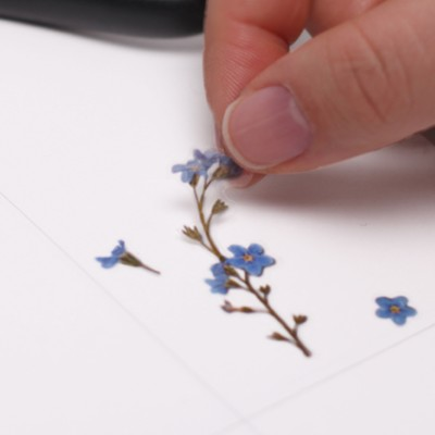 Appree Sticky Pressed Flower Sticker - Forget me not