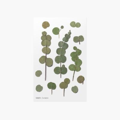 Appree Sticky Pressed Flower Sticker - Eucalyptus