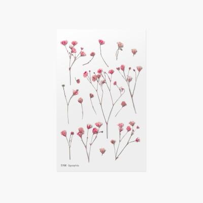 Appree Sticky Pressed Flower Sticker - Gypsophila